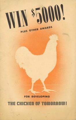 chicken-of-tomorrow-3